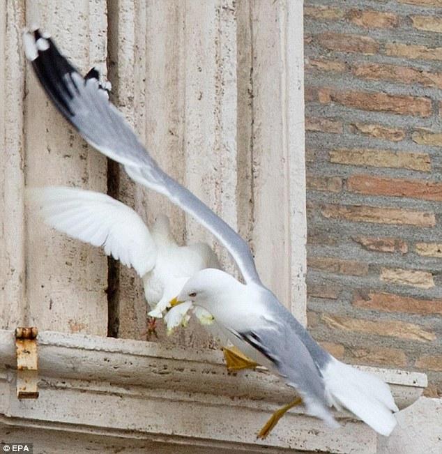 http://www.imdleo.gr/diaf/2014/03/images/seagull-dove.jpg